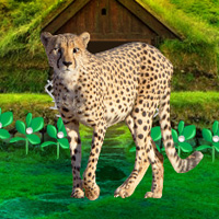 Wowescape Save The Mountain Cheetah